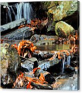 Small Stream Acrylic Print