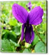 Small Violet Flower Acrylic Print