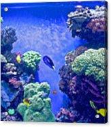 Smaller Fish In Monterey Aquarium-california  Acrylic Print