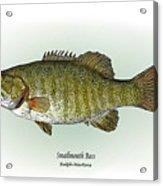 Smallmouth Bass Acrylic Print by Ralph Martens