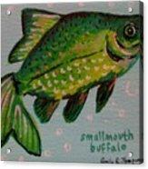 Smallmouth Buffalo Acrylic Print