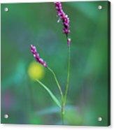 Smart Weed Acrylic Print