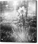 Smell Of The March Acrylic Print