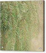 Smell The Pine Acrylic Print