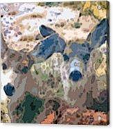 Smidgeon And Rudi 2 Acrylic Print