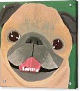 Smiling Senior Pug Acrylic Print