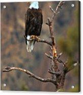 Smith Rock Bald Eagle Acrylic Print