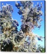 Smoke Tree In Bloom With Blue Purple Flowers Acrylic Print