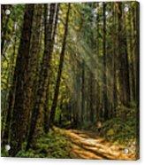 Smokey Forest Acrylic Print