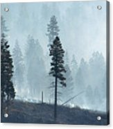 Smokey Trees Acrylic Print