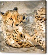 Smokin Cheetah Love Acrylic Print