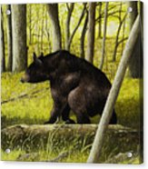 Smoky Mountain Bear Acrylic Print