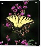 Smoky Mountain Butterfly Acrylic Print