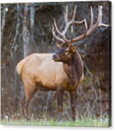 Smoky Mountain Elk II - North Carolina's Cataloochee Valley Wildlife Acrylic Print