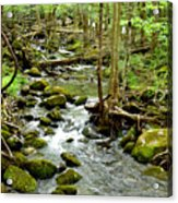 Smoky Mountain Stream 1 Acrylic Print