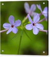 Smoky Wildflowers Acrylic Print