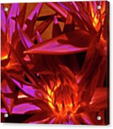Smoldering Lilies Acrylic Print