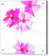 Smudged Floating Pink Flowers Acrylic Print