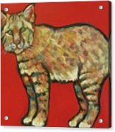 Smug Bobcat Acrylic Print