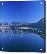 Snags- Lake Isabella Acrylic Print