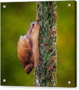 Snail Climbing The Tall Grass Acrylic Print