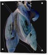 Snail Hugs Acrylic Print