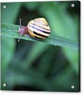 Snail In His Green Jungle Acrylic Print