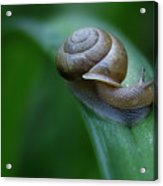 Snail In The Morning Acrylic Print