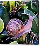 Snail On A Bush Version 2 Acrylic Print
