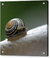 Snail On Rock Acrylic Print