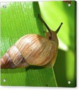 Snail Work B Acrylic Print