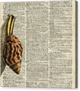 Snail Worm On Dictionary Page Acrylic Print