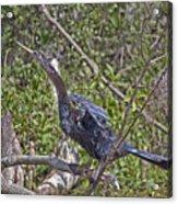 Snake Bird Acrylic Print