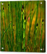 Snake Grass Acrylic Print