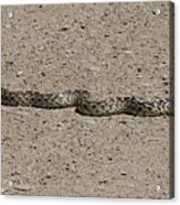Snake On The Road Acrylic Print