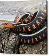 Snakes On A Stump Acrylic Print