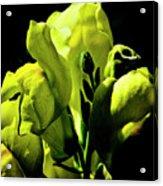 Snapdragon Acrylic Print