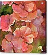 Snapdragon Dream Acrylic Print