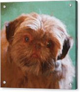 Snicker Doodle 852 -  Painting Acrylic Print