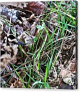Snipe In Camouflage Acrylic Print