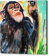 Snooty Monkey Acrylic Print