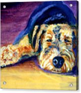 Snooze Airedale Terrier Acrylic Print by Lyn Cook