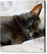 Snoozy Kitty Acrylic Print