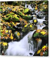 Snoqualmie National Fores Acrylic Print