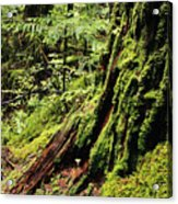 Snoqualmie National Forest Acrylic Print