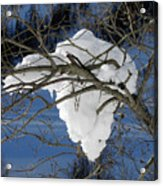 Snow And Africa Acrylic Print