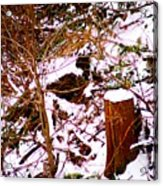Snow And Tree Trunk Acrylic Print