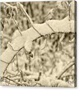 Snow Arch Acrylic Print