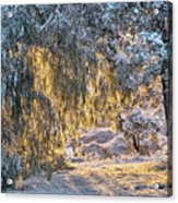 Snow At Sunrise 4 Acrylic Print