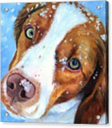 Snow Baby - Brittany Spaniel Acrylic Print by Lyn Cook